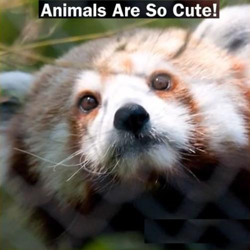 Animals Are So Cute!