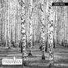 ParaVan - Black Milk