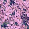 Disclosure - Latch (Cover)