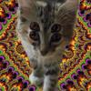 catnip overdose