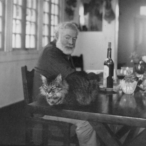 Hemingway's Cats Cover Art