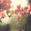 Musikalisasi puisi ( Cinta - Kahlil Gibran )