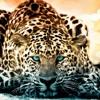 Dimitri Vegas & Like Mike & Ummet Ozcan vs Ellie Goulding - Jaguar Love (Erick Fouda YearMashup)