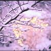 Sing Winter