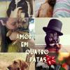 Amor Em Quatro Patas- Flávio Chiecchi
