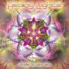 Aioaska & Noreya - Seeds Of Love