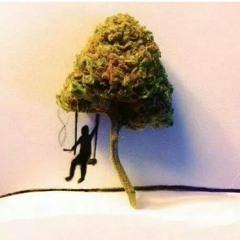 Smokin' Weed (Everyday)