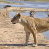 Safari: Zambia's hidden jewel