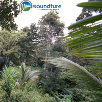 soundture relaxing meditation morning mood in jungle