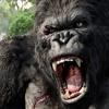F - Rontal & Marvin Erbe - King Kong (Disastar Kong is a Bad Remix)