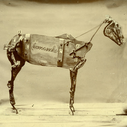 Horse Comanche
