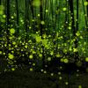 Fireflies Where'd You Go (Joyful DubStep Mix)