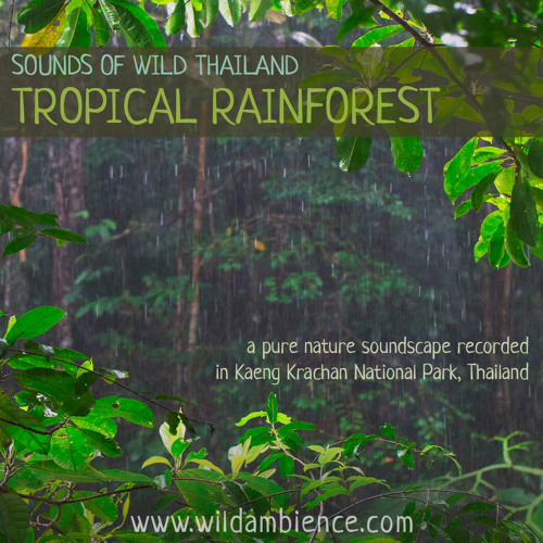 Sounds of Wild Thailand I: 'Thailand's Tropical Rainforest'