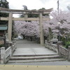 大宝神社の初詣 The first visits of the year at Daiho shrine