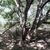 The Music Tree 2/2