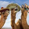 Sagan om kamelen som knarkade så mycket att han drunknade i Sahara