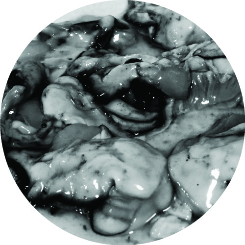 C POWERS - OYSTERS [proper-008] - 1Q 2015