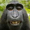 021- Free Monkey Smiles