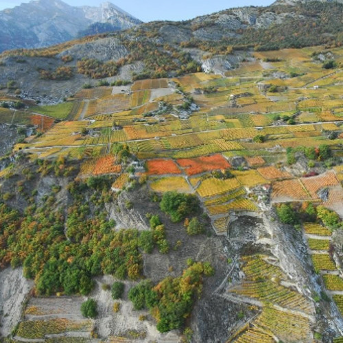 The Wine Show on Mountain Radio Verbier