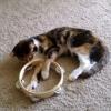 MC Mittens the Kitten - Meow High