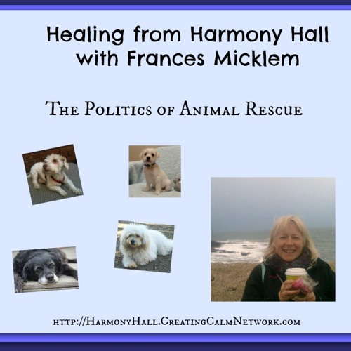 Healing from Harmony Hall with Frances Micklem - The Politics of Animal Rescue