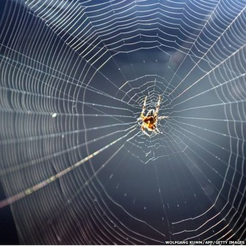 The healing power of... Spider silk?