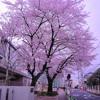 louiewarhols x Sakura (Chopped & Screwed)