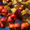 Let Fruit Ripen And Let Fall - THE RARRS & the mews