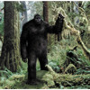 The Mating Dance Of Big Foot