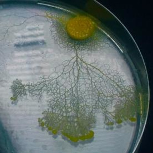 Slime mould_ Day two
