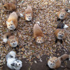 Fox Bass Party I - Mr. Fox