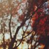 Sing Along, Billy Crudup (por Jonatan Santana)