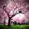 Mal Wieder Eine Frühlingsmelodie