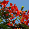 Fagun Haway Haway by Reeta