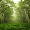 Forest Stroll (Speed Walk Edit)