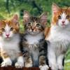 Kitty Style