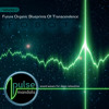 Pulse Mandala : Journey To A New Awakening