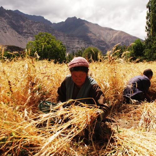 Emission Agriculture Familiale