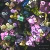 Cathedrals - Want My Love (TastyTreat X BLACK MONDAY Remix)
