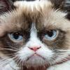 Happy grumpy cat.