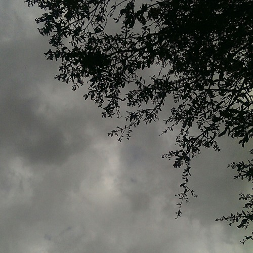 1 Hour of Rain and Thunder Storm with Birds near the end, in