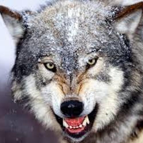 a closer walk with wolfie (loop/not loop)