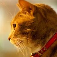 猫になりたい(SPITZ cover) ~featuring ヨルダンの猫~ Artwork
