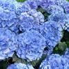 SpringTime - Yiruma 3cju