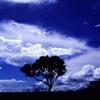 Moby-The sky is broken (Markus Gross Strings Works)