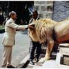 Ital Lion