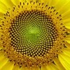In Our Time: The Fibonacci Sequence