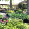 Best Places to Buy Plants