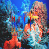 R E E F | Oceanlife | #OceanDelta | @CERT @SlamJamz