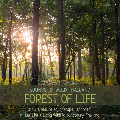 Sounds of Wild Thailand III: Forest of Life